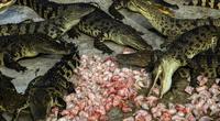 """Bí ẩn bên trong trang trại cá sấu siêu """"khủng"""" nhất Thái Lan"""