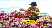 Trung Quốc đang thiếu hụt, Việt Nam tăng tốc xuất khẩu rau quả