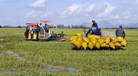Cục trưởng Cục Trồng trọt: Muốn làm giàu từ trồng lúa, phải có ít nhất 10ha ruộng