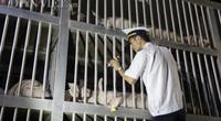 Trắng đêm thông quan gần 2.500 con lợn nhập từ Thái Lan về cửa khẩu Lao Bảo
