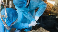 Kỷ niệm 70 năm ngành thú y: Ngăn chặn dịch bệnh nguy hiểm, bảo vệ sức khỏe động vật