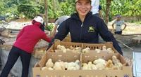 Mavin hỗ trợ 15.000 con gà giống, thức ăn chăn nuôi cho người nghèo Thanh Hóa