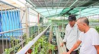 Tranh thủ lúc nhiều người đang săn lùng, một nông dân Quảng Trị làm giàu nhờ trồng lan rừng