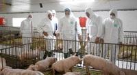 Trung Quốc nhập 1,72 triệu tấn thịt lợn, giá lợn hơi Việt Nam chưa thể giảm sâu