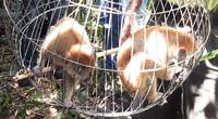 Bình Định: 4 con thú rừng quý hiếm do dân giao nộp vừa được thả lên rừng là những loài nào?