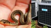 """""""Kinh hồn bạt vía"""" phát hiện 40 con rắn sống lúc nha lúc nhúc trong điều hòa"""