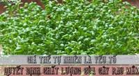 Giá thể tự nhiên là yếu tố quyết định chất lượng của cây rau mầm