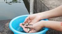 Hà Giang: Khám phá nơi thuần dưỡng các loài cá quý hiếm, có cả cá Anh vũ tiến vua