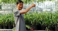 """Vườn lan """"khủng"""" của anh nông dân có giò lan đột biến Bạch tuyết 5 cánh trắng bán 1,5 tỷ"""