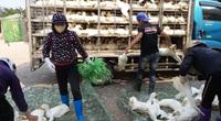 Giá gia cầm hôm nay 14/7: Giá vịt thịt một số nơi tăng nhẹ, gà công nghiệp đang nhích lên