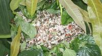 """Cá gỏi kiến vàng - đặc sản """"sống sít"""" vừa ăn vừa run tay của người Rơ Măm"""