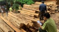 Xưởng chứa gần 200m3 gỗ, chủ doanh nghiệp bị bắt tạm giữ