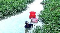 An Giang: Xuống sông săn bắt hàng chục ký trùn chỉ, kiếm tiền triệu mỗi ngày