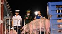 Thủ tướng đánh giá cao nỗ lực giảm giá thịt lợn của Bộ NNPTNT, đàn lợn sẽ tăng mạnh từ quý IV/2020