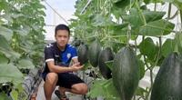 Phú Yên: Vườn dưa trăm trái trên sân thượng của chàng kỹ sư viễn thông