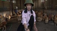 Thông tin Khuyến nông: Cách làm đệm lót vi sinh xử lý mùi hôi trại gà