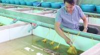 """Bỏ lương cao ở Nhật Bản trai Vĩnh Long về quê chỉ để """"nghịch nước"""" nuôi lươn"""