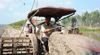 Đồng Tháp: Trồng lúa kiểu ông Khanh, mỗi vụ đón 3-5 doanh nghiệp đến mua, ung dung lãi 4 tỷ