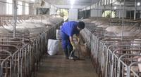 Trung Quốc nhập 5 triệu tấn thịt lợn lo bữa ăn cho cả tỷ dân, giá thịt lợn chưa thể giảm sâu
