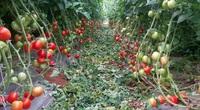 Làm nông nghiệp theo cách chưa từng có, nông sản Sơn La dễ dàng đi khắp thế giới