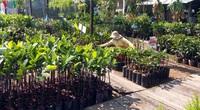 Tiền Giang: Giá cây giống tăng chóng mặt, sầu riêng lên tới 120.000 đồng/cây