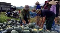 Lạng Sơn: Dưa hấu được mùa, 10 quả đẹp cả 10, trồng 15 sào nông dân lời 100 triệu