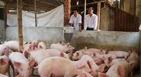 Giá heo hơi hôm nay 5/7: Giá lợn miền Bắc 93.000 đồng/kg, chủ trại thở phào vì trả hết nợ