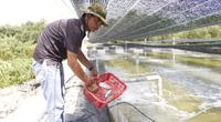Quảng Trị: Bỏ chức giám đốc, đánh liều vay vốn nuôi ốc hương đem lại hiệu quả bất ngờ