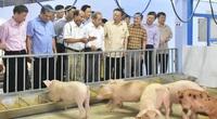 Trang trại 4F: Không cần tắm lợn, không cần rửa chuồng, không mùi hôi