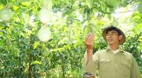 Nâng tầm cây chanh leo Việt Nam với thế giới