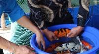 """Quảng Ngãi: Ngắm đàn cá """"quốc ngư"""" Nhật Bản của chàng trai trẻ tuổi 20"""