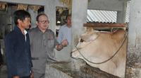 Chủ tịch Hội Nông dân Việt Nam thăm trại bò vàng tiền tỷ ở huyện nhiều đá nhất Việt Nam
