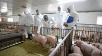 Bộ trưởng Nguyễn Xuân Cường: Tốc độ tăng đàn lợn nái đang rất cao, đạt 2,8 triệu con