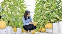 Trồng rau quả hữu cơ, sạch môi trường lại thu lời lớn