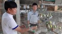 Tây Ninh: Nuôi loài chim có thể tập nói như tiếng người mà làm giàu