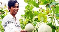 """""""Bơm"""" 17.500 tỷ đồng phát triển nông nghiệp ĐBSCL bền vững, gắn với xây dựng nông thôn mới"""