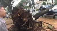 Lâm Đồng: Cây xanh bật gốc đè bẹp ô tô con