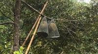 """An Giang: Vùng đất trồng sầu riêng trên núi phải lấy lồng sắt bao trái để chống """"đội quân ăn trộm"""" đặc biệt"""