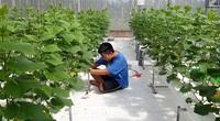 Bỏ kỹ sư cơ khí về làm ông chủ vườn rau công nghệ cao phục vụ các mẹ bỉm sữa