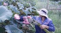Lai Châu: Ao thả cá chả vui, trồng cây lá to như cái thúng lại đông người tới xem