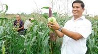 Trồng thứ bắp tên sang chảnh, ăn sống ngay tại ruộng, 1 nông dân Đồng Nai trúng lớn