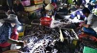Phú Yên: Chợ đèn pin mà đâu có bán đèn, bán pin, bán toàn những loài tanh tanh trong bóng tối