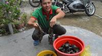 Kiên Giang: Cho cua kềnh ở chung với tôm sú, cứ 1ha dân bắt 1 tấn, bán được 160 triệu đồng