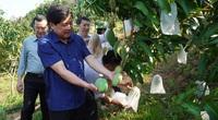 Yên Châu phát triển cây ăn quả theo hướng hữu cơ