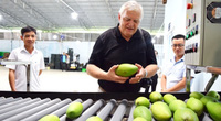 Covid-19 cản đường trái cây Việt Nam sang Mỹ, Trung Quốc