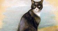 Bí ẩn chú mèo sống sót trên 3 chiến hạm bị đánh chìm thời Thế chiến II