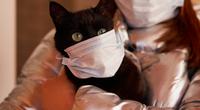 Khoa học phát hiện: Mèo có thể phát tán Covid-19 trong cộng đồng