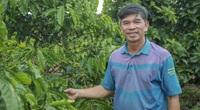 Video: Bỏ nghiệp bóng đá, Giám đốc điều hành CLB HAGL về làm nông nghiệp hữu cơ