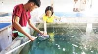 Khánh Hòa: Nuôi loài cá ngựa đen F2 cho đẻ nhân tạo thành công