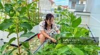 """TP. Vinh: Chị em nội trợ đua nhau trồng vườn rau trên sân thượng """"vạn người mê"""""""